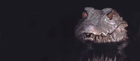 In the dark water, deep in the swamp, an alligator is pretty scary creature.