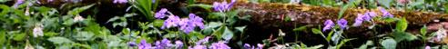 violets-strip-blog