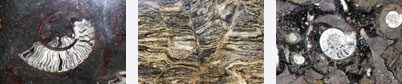 Fossils and compressed lava add to nature's artwork